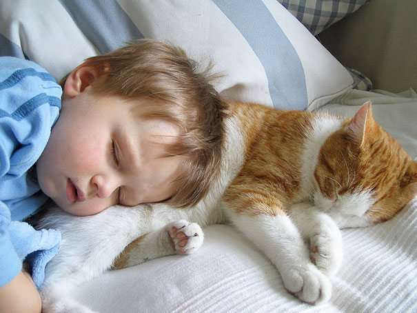20 bức ảnh chứng tỏ bé nên có một bạn mèo - 9