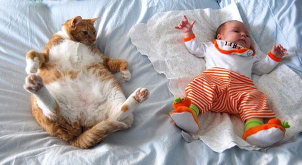 20 bức ảnh chứng tỏ bé nên có một bạn mèo - 15