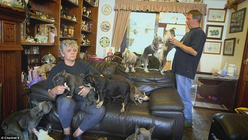 Cặp vợ chồng già sống chung với 41 chú chó - 4