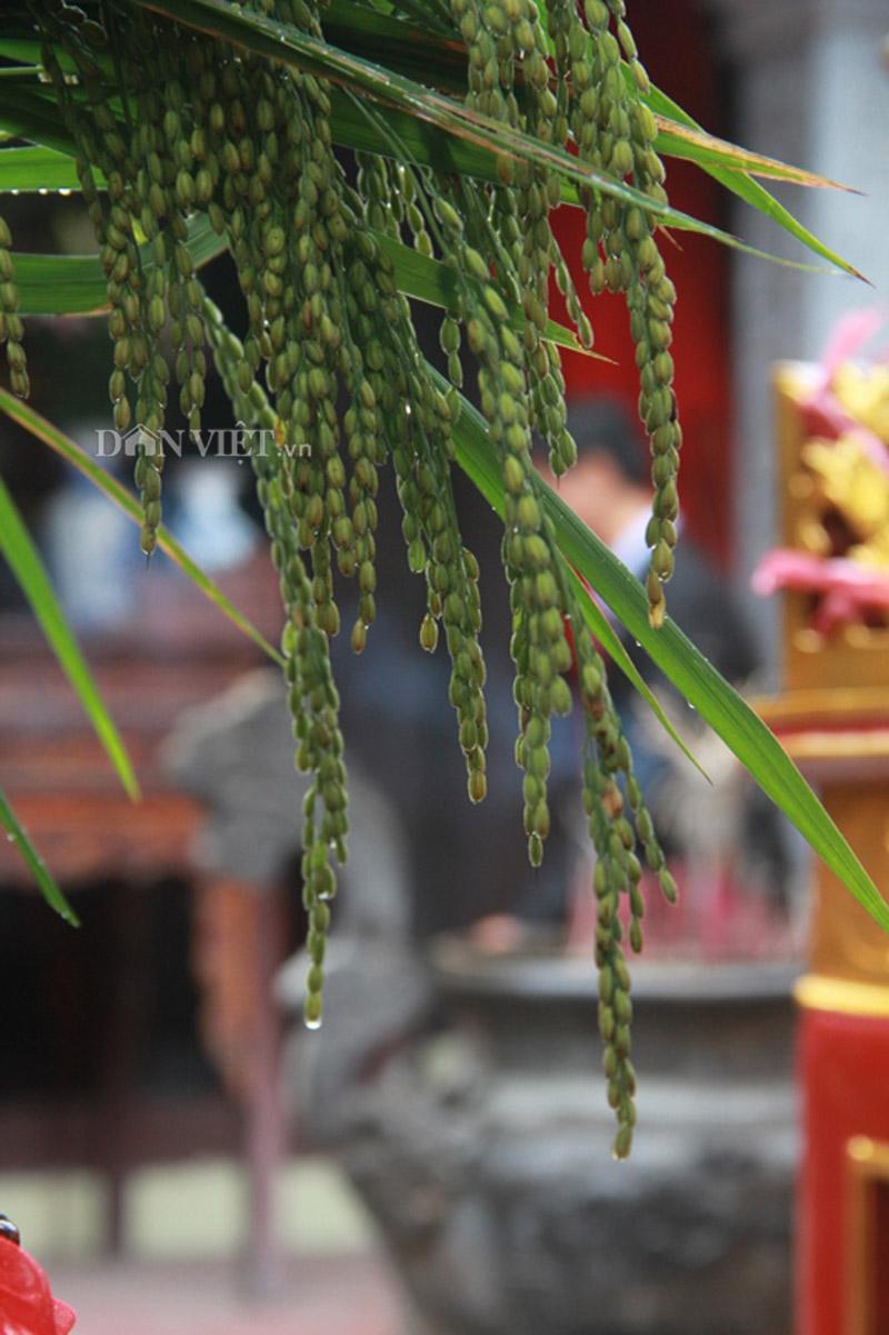 Hương cốm ngào ngạt trong ngày hội làng cốm Mễ Trì - 9