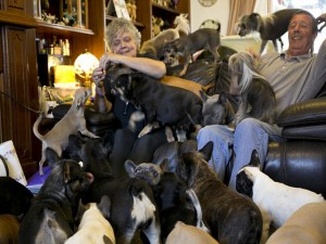 Cặp vợ chồng già sống chung với 41 chú chó