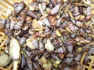 Ẩm thực - Ấm nồng với món ốc len luộc riềng