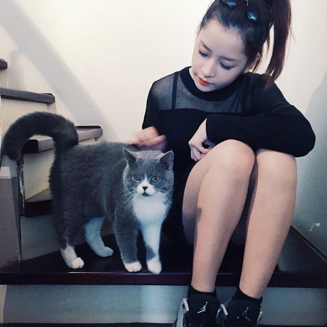 """Mèo """"hàng trăm triệu"""" làm thú cưng của người đẹp châu Á - 6"""