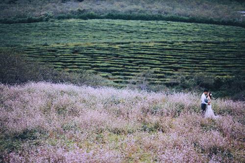 Mê mẩn bộ ảnh cưới giữa cánh đồng hoa tam giác mạch - 4
