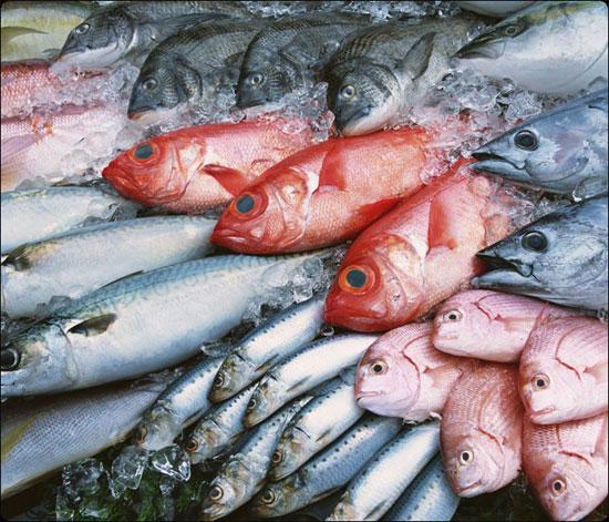 Bắt đầu ăn dặm: Nên cho bé ăn cá đồng hay cá biển? - 1