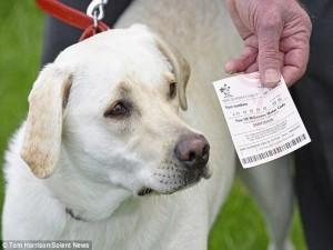 Tin tức trong ngày - Anh: Trúng số độc đắc 2 lần trong 1 ngày nhờ... chó