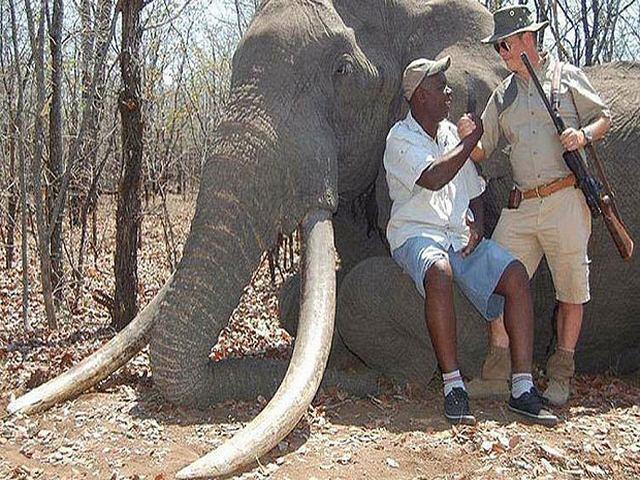 Chi 1,3 tỉ để bắn chết chú voi lớn nhất châu Phi - 1