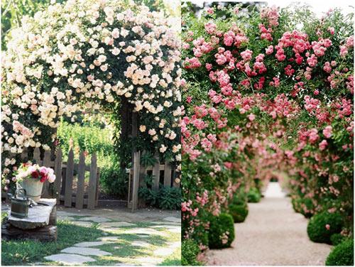 Bảo Anh mong chờ dạo bước tại vườn hồng lớn nhất Sài Gòn - 6