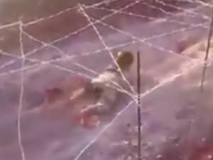 Tin tức trong ngày - Video: IS huấn luyện bé 6 tuổi bò dưới làn đạn AK47