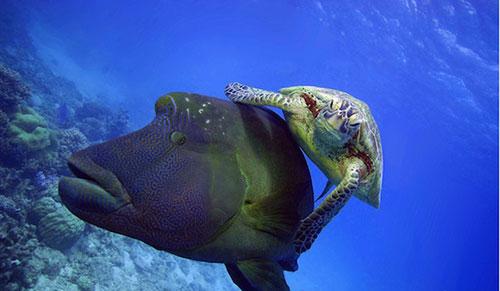 Hiện tượng lạ: Khi các loài động vật…cưỡi lên lưng nhau - 5