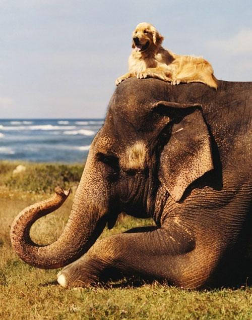Hiện tượng lạ: Khi các loài động vật…cưỡi lên lưng nhau - 10
