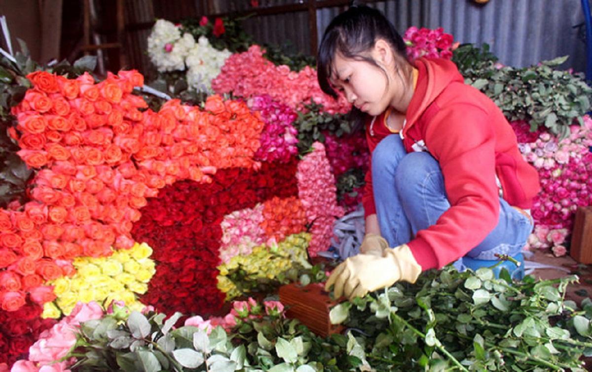 Hoa hồng Đà Lạt tăng giá gấp 3-4 lần trước ngày 20.10 - 1