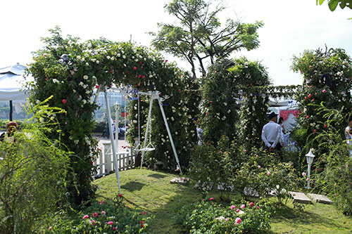 Cùng dạo bước tại vườn hồng lớn nhất Sài Gòn - 8