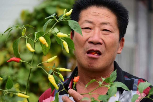"""""""Dị nhân"""" Trung Quốc ăn 2,5 kg ớt mỗi ngày - 3"""