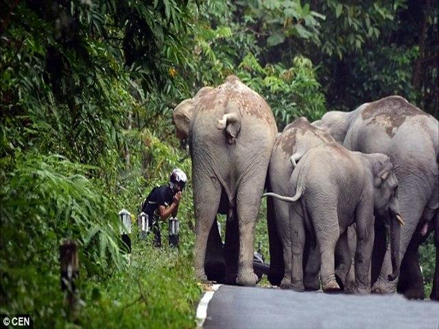 Thái Lan: Người đi xe máy quỳ lạy xin voi tha mạng - 2