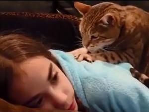 """Bạn trẻ - Cuộc sống - Clip: Cực phê khi được mèo yêu """"mát xa"""""""