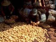 Giá cả - Đà Lạt cấm nhập khoai tây Trung Quốc