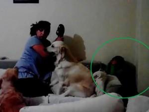 """Bạn trẻ - Cuộc sống - Hai chú chó """"bênh"""" bé chằm chặp khi bị mẹ đánh"""