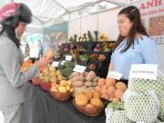 Thị trường - Tiêu dùng - Phân biệt khoai tây TQ và Đà Lạt bằng mắt thường