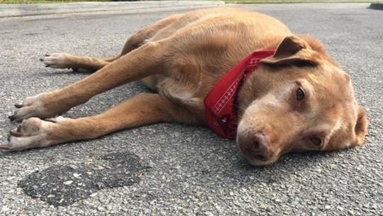 Chó nằm phục hàng giờ tại nơi chủ bị tai nạn chết - 1