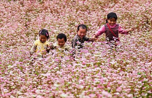 Khám phá những vùng hoa tam giác mạch đẹp nhất Việt Nam - 4