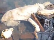 Phi thường - kỳ quặc - Sốc với xác quái vật bí ẩn ở Paraguay