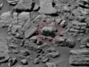 Phi thường - kỳ quặc - Phát hiện gấu con đi trên sao Hỏa