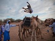 """Thể thao - Nhảy qua lưng lạc đà, môn thể thao """"dị"""" của Yemen"""