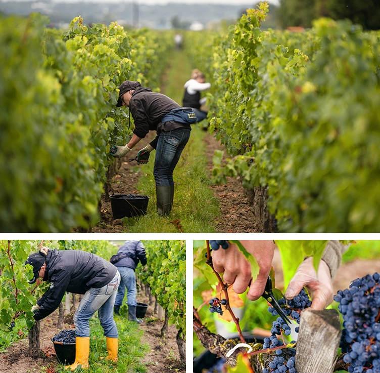 Khám phá trang trại rượu nho Pháp 97 tỉ của Triệu Vy - 11