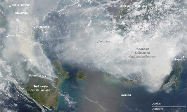 Ảnh: Cháy rừng tồi tệ ở Indonesia gây loang khói bụi mù mịt - 1