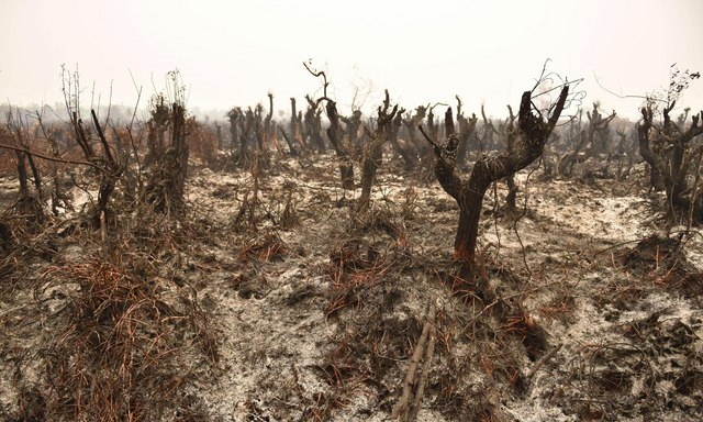 Ảnh: Cháy rừng tồi tệ ở Indonesia gây loang khói bụi mù mịt - 4