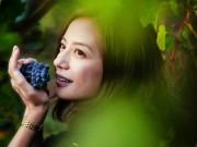 Ngôi sao điện ảnh - Khám phá trang trại rượu nho Pháp 97 tỉ của Triệu Vy