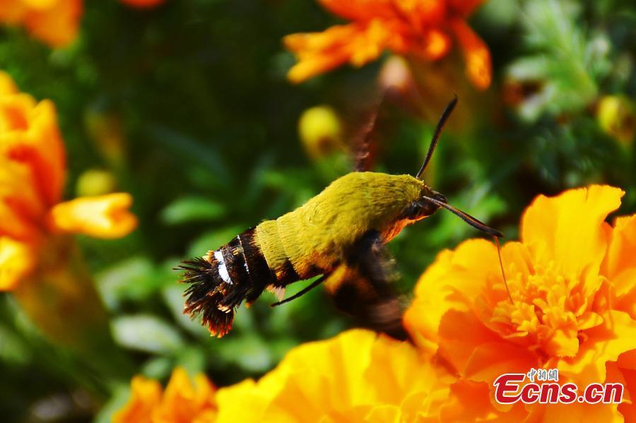Phát hiện loài côn trùng cực hiếm ở Trung Quốc - 1