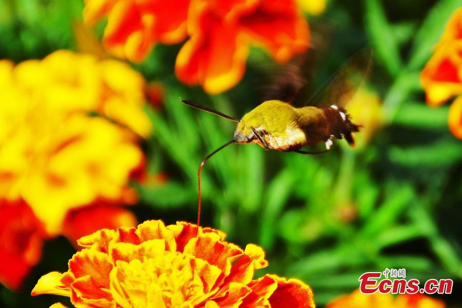 Phát hiện loài côn trùng cực hiếm ở Trung Quốc - 2