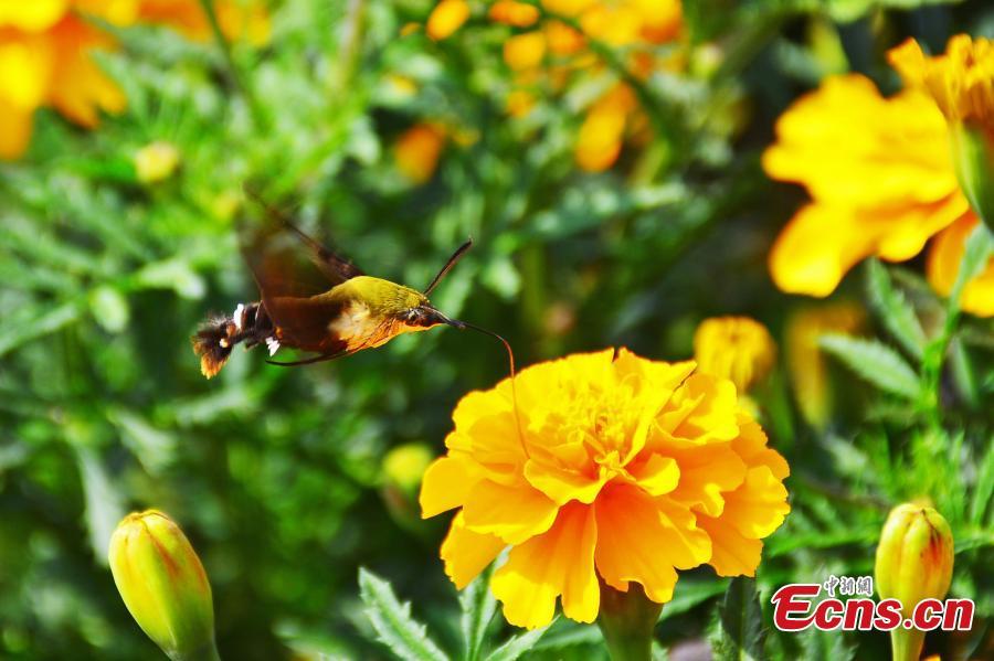 Phát hiện loài côn trùng cực hiếm ở Trung Quốc - 3