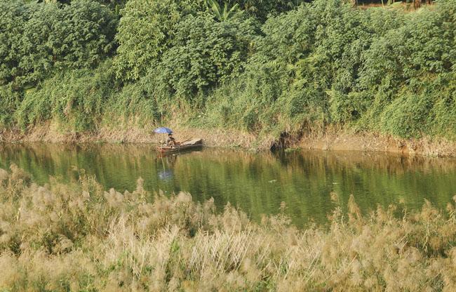 Ảnh: Mùa cỏ lau thơ mộng dưới chân cầu Long Biên - 7