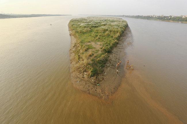 Ảnh: Mùa cỏ lau thơ mộng dưới chân cầu Long Biên - 6
