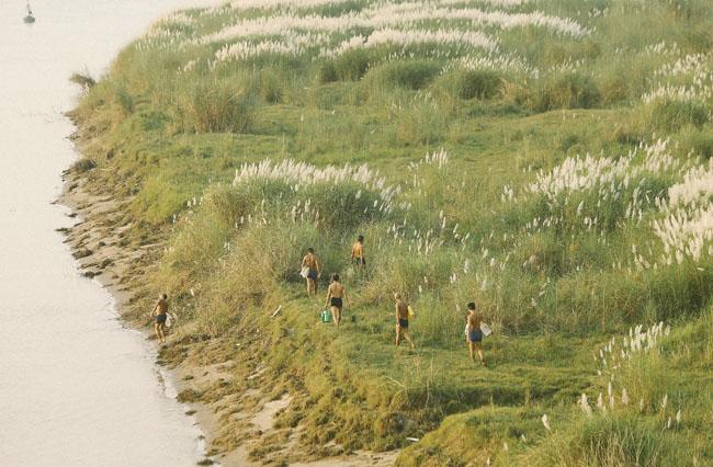 Ảnh: Mùa cỏ lau thơ mộng dưới chân cầu Long Biên - 2