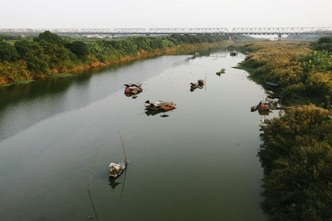Ảnh: Mùa cỏ lau thơ mộng dưới chân cầu Long Biên - 8