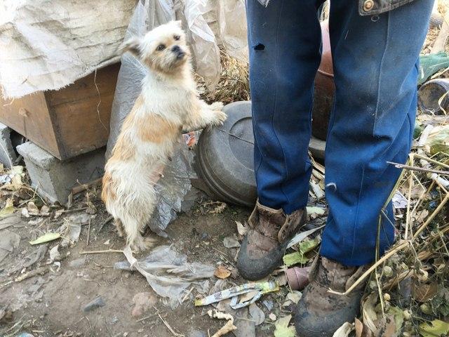 TQ: Ông lão vô gia cư sống cùng 40 chú chó hoang - 2