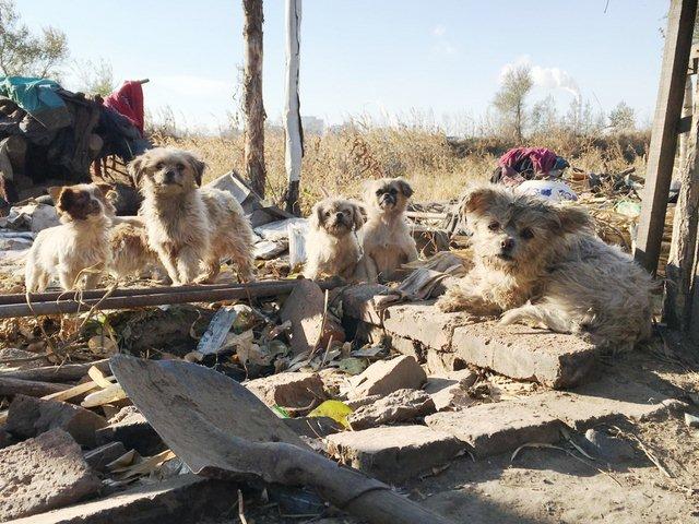 TQ: Ông lão vô gia cư sống cùng 40 chú chó hoang - 3