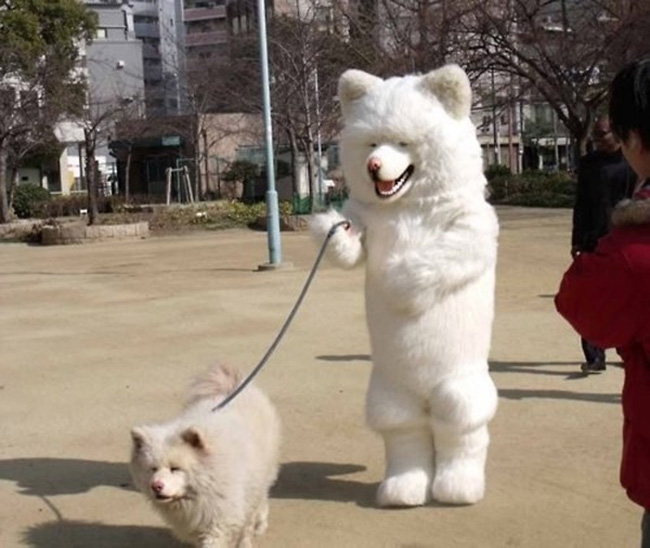 """Người chủ  """" bá đạo """"  hóa trang thành chính chú chó của mình."""