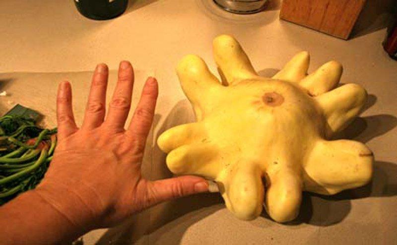Halloween, ngắm bí ngô hình ngón tay cực lạ - 12