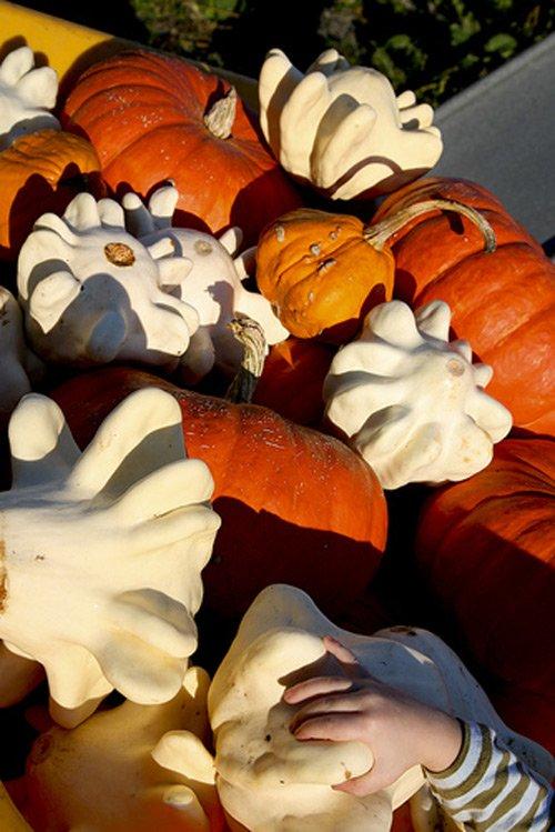 Halloween, ngắm bí ngô hình ngón tay cực lạ - 5