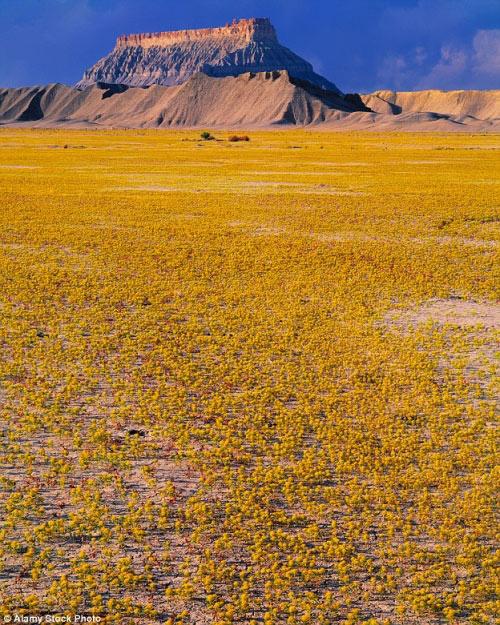 Hàng triệu bông hoa sống dậy ở sa mạc khô cằn nhất TG - 7