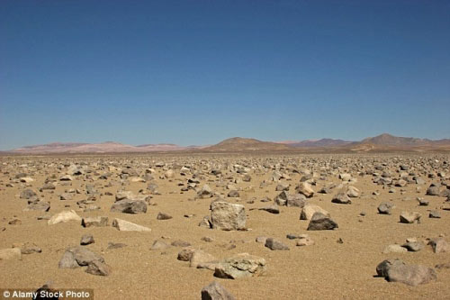 Hàng triệu bông hoa sống dậy ở sa mạc khô cằn nhất TG - 1