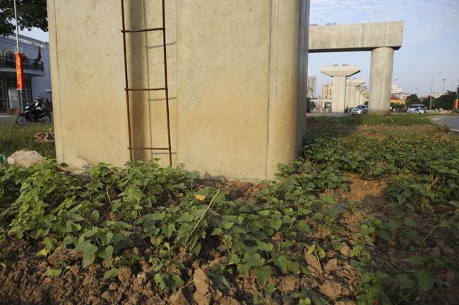 """HN: """"Quây rào, phân lô"""" trồng rau dưới đường sắt trên cao - 5"""