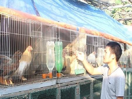 Bỏ ghế trưởng phòng, từ chối đi Úc về nuôi gà - 1