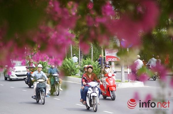 """Khách du lịch mê mẩn """"thành phố hoa giấy"""" Nha Trang - 2"""