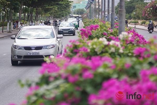 """Khách du lịch mê mẩn """"thành phố hoa giấy"""" Nha Trang - 4"""